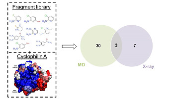 Pushing The Limits Of Detection Of Weak Binding Using Fragment Based Drug Discovery: Identification Of New Cyclophilin Binders