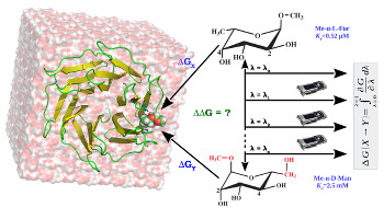 Evaluation of Selected Classical Force Fields for Alchemical Binding Free Energy Calculations of Protein-Carbohydrate complexes